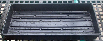 seed-starting-trays